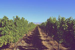 Cosa si intende per vini biodinamici e naturali?